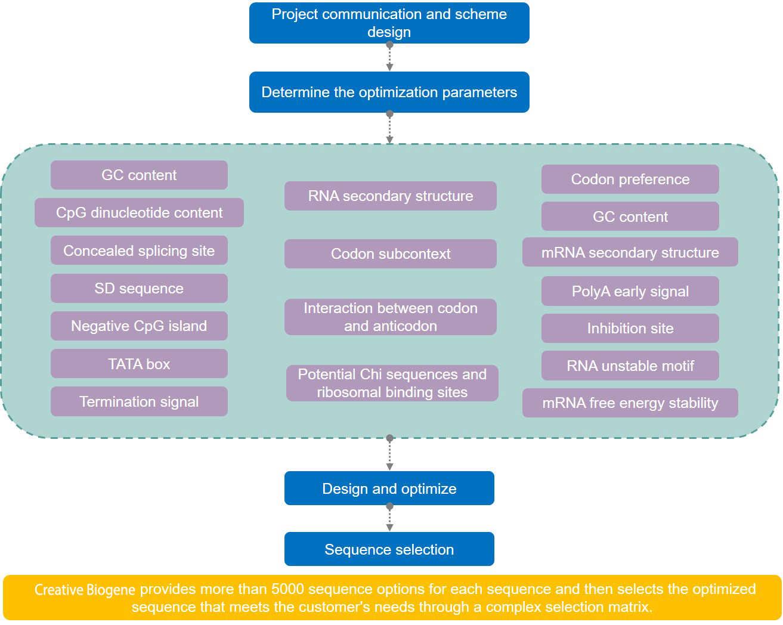 Codon Optimization of Mitochondrial Gene