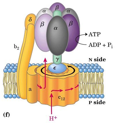 Determination of Total ATP Level