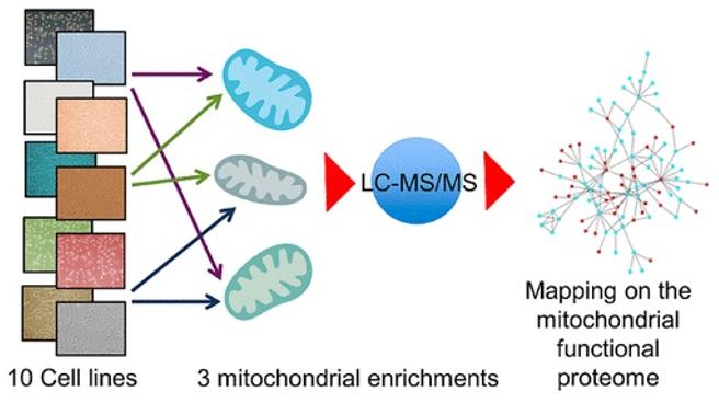 Mitochondrial Proteomics