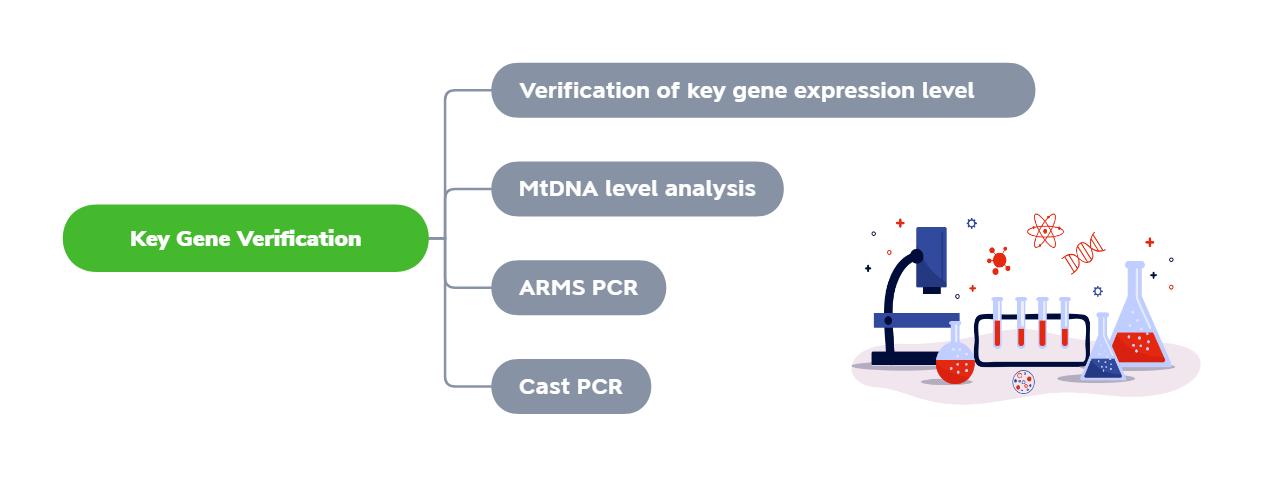 Realtime PCR Verification